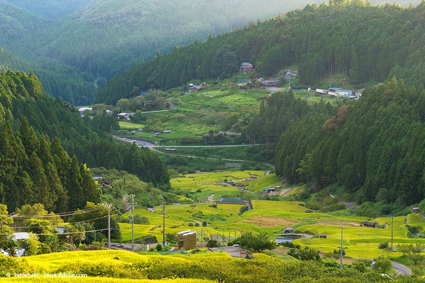 Reisterrassen von Yotsuya in Aichi