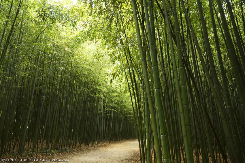 Bambusrohre in einem Bambuswald bei Sonnenschein