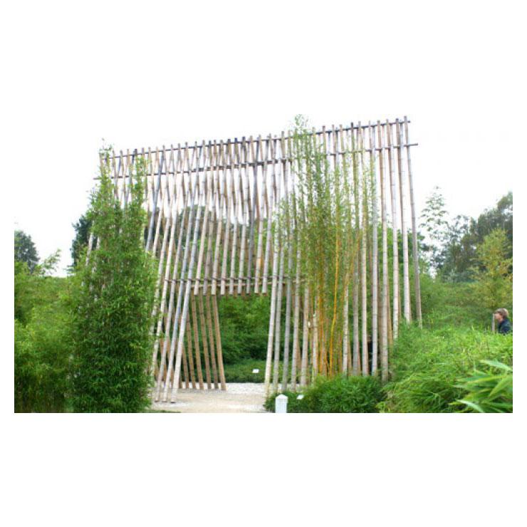 Bambusrohre Naturgelb 500 520 Cm Bambusrohre Bambus Garten