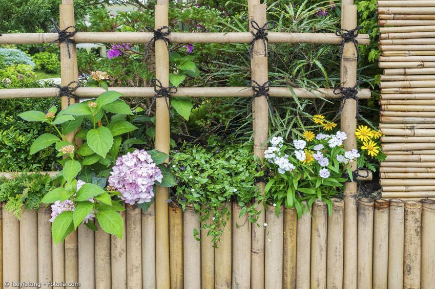 Bambus kann im Garten vielseitig eingesetzt werden. Es muss nicht immer der blickdichte Bambuszaun sein – auch ein Rankgitter aus Bambus für Blumen ist eine schöne Ergänzung.