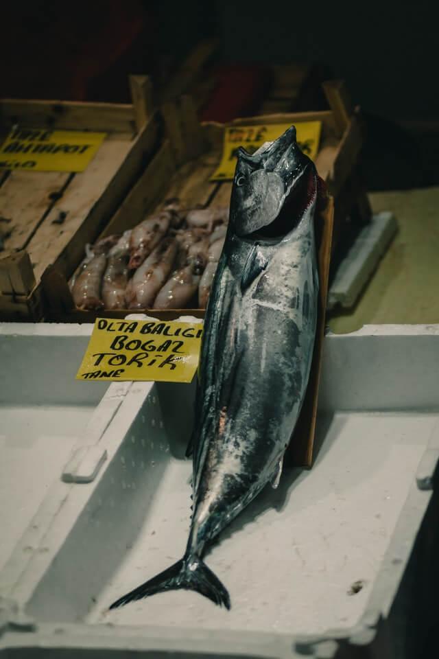 Thunfisch im Verkauf