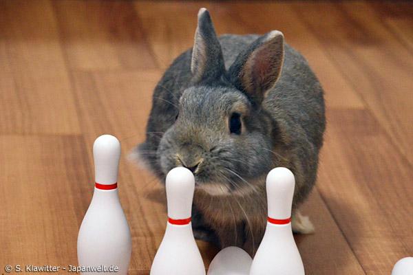 Niedliche Häschen, ein bisschen Spielzeug und Salat: Bunny-Cafés verbreiten sich immer mehr in Japan. Oft wird nach Minuten bezahlt.