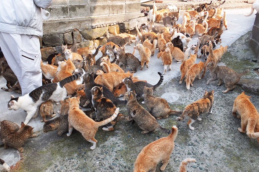 Einheimische der Katzeninseln füttern die Fellknäuele