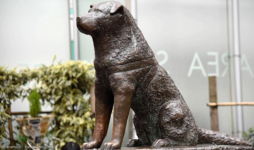Hachiko Bronzestatue am Bahnhof Shibuya