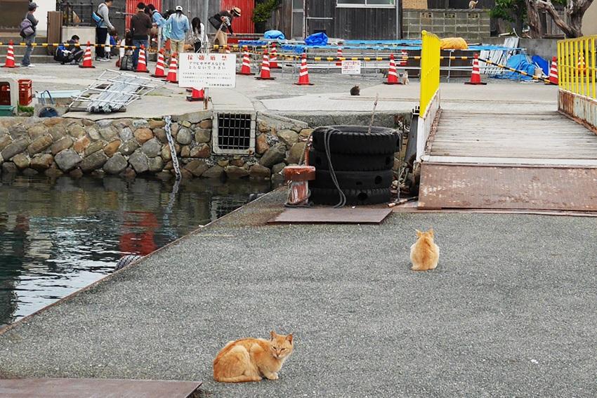 Katzen am Hafen von Aoshima
