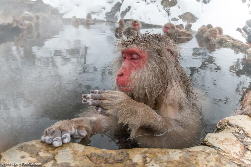 Onsen sind in Japan im Winter gleichermaßen beliebt bei Mensch und Tier. Sie verheißen Entspannung und das Aufwärmen an kalten Tagen
