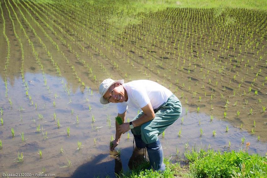 Ein Rezept für das Erreichen eines dreistelligen Alters ist die hohe körperliche und geistige Aktivität bis ins Alter. Auf Okinawa ist es beinahe üblich, auch noch mit über 80 Jahren auf den Feldern zu arbeiten.