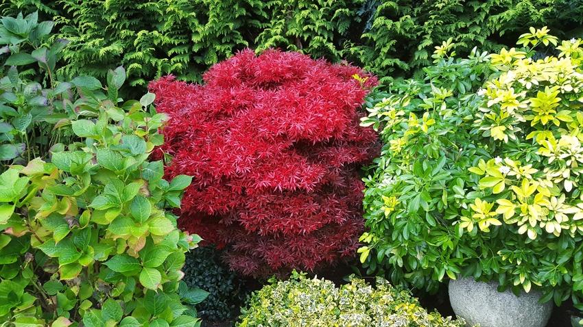 In Allen Jahreszeiten Soll Der Japanische Garten Dem Betrachter Etwas  Bieten. Einzelne Farbige Akzente Zwischen Dem Grün Sind Besonders Beliebt.