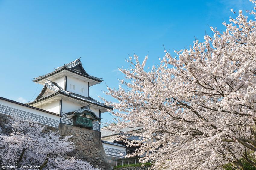 Kanazawa Schloss mit Kirschblüten