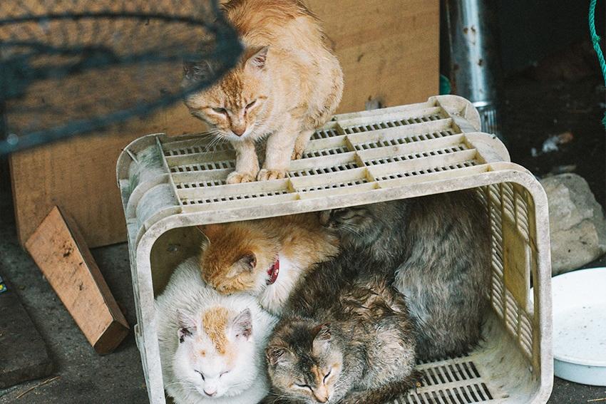 Katzen bei den Fischern von Aoshima, Japan