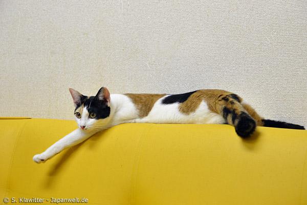 Katzen relaxen in den Cafés genauso wie die Menschen, die sie besuchen kommen.