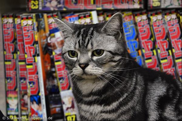 Katzen streicheln und dabei Manga lesen – so geht die Zeit im Katzencafé viel zu schnell vorbei.