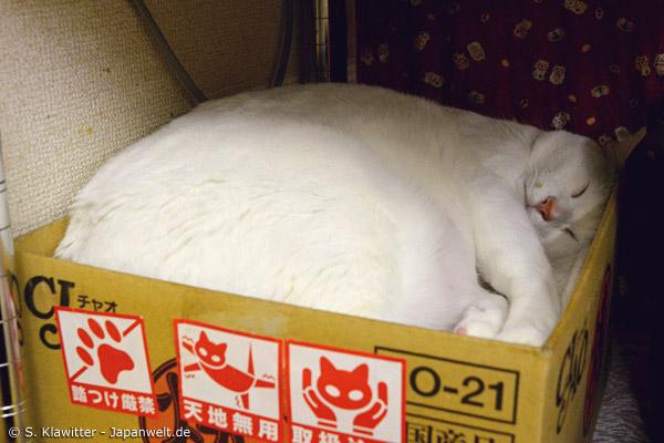 Auch Ausruhen ist wichtig: Wenn eine Katze sich an ihrem Ruheort zusammengerollt hat, darf sie kein Besucher stören.