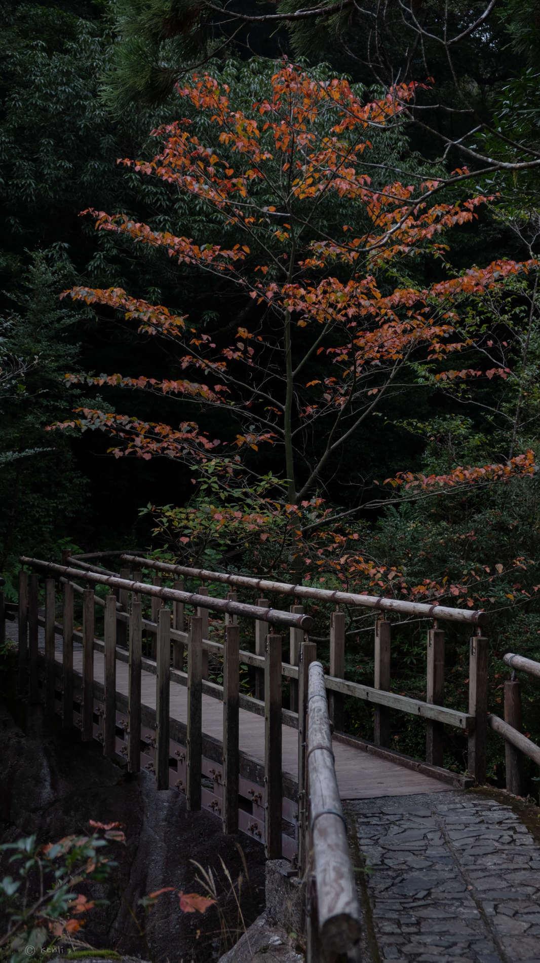 Weg auf den Berg Miyanoura-dake