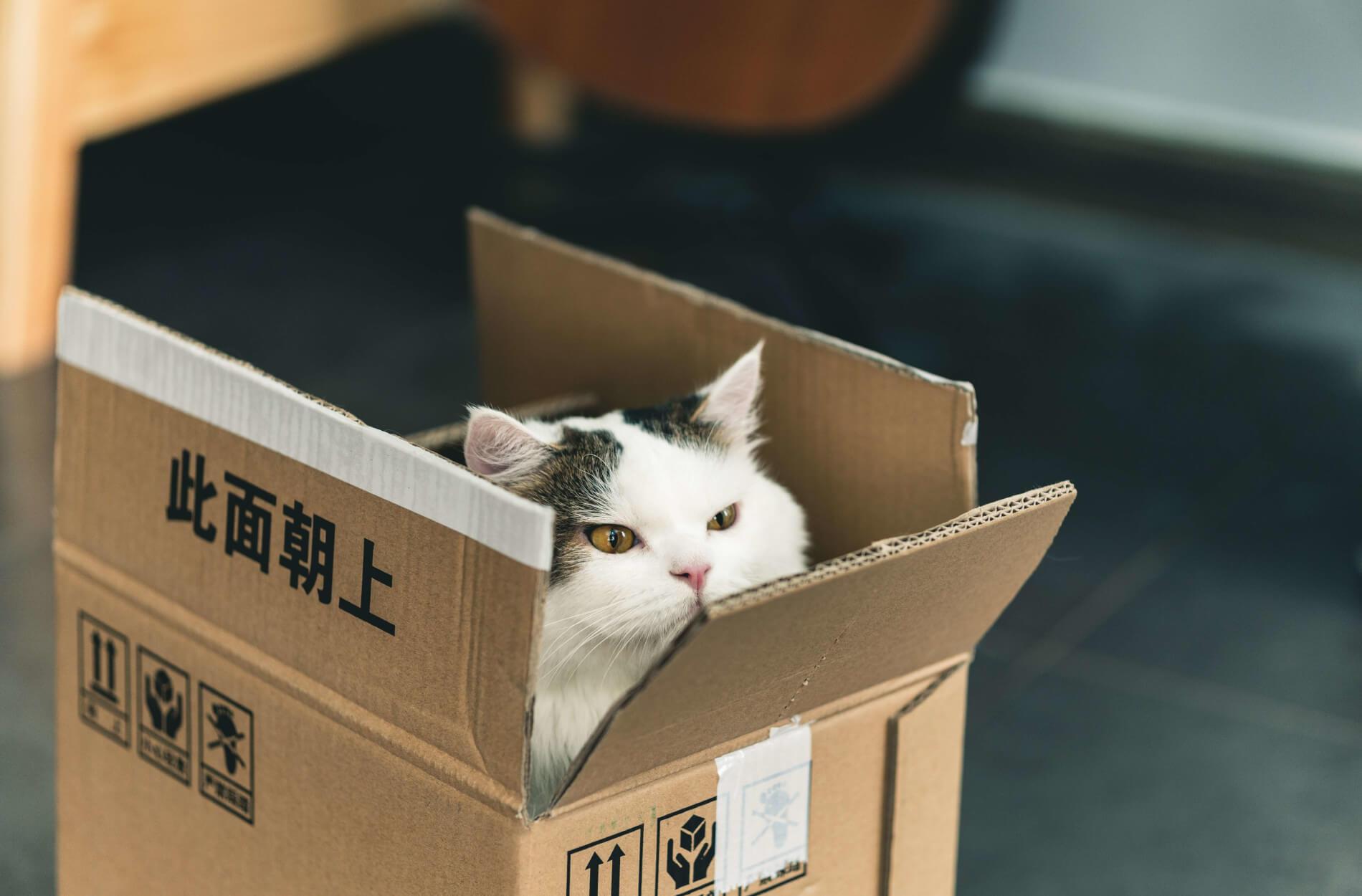 Katze in einer Mystery Box