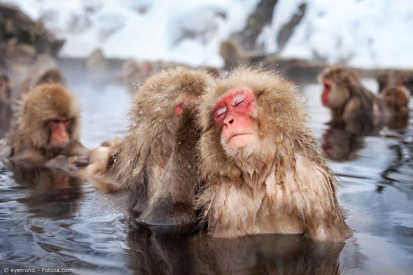 Menschen und Tiere genießen die entspannende und wohltuende Wirkung der heißen Onsen gleichermaßen. Vor allem im Winter sind die Thermalbäder in ganz Japan beliebt.