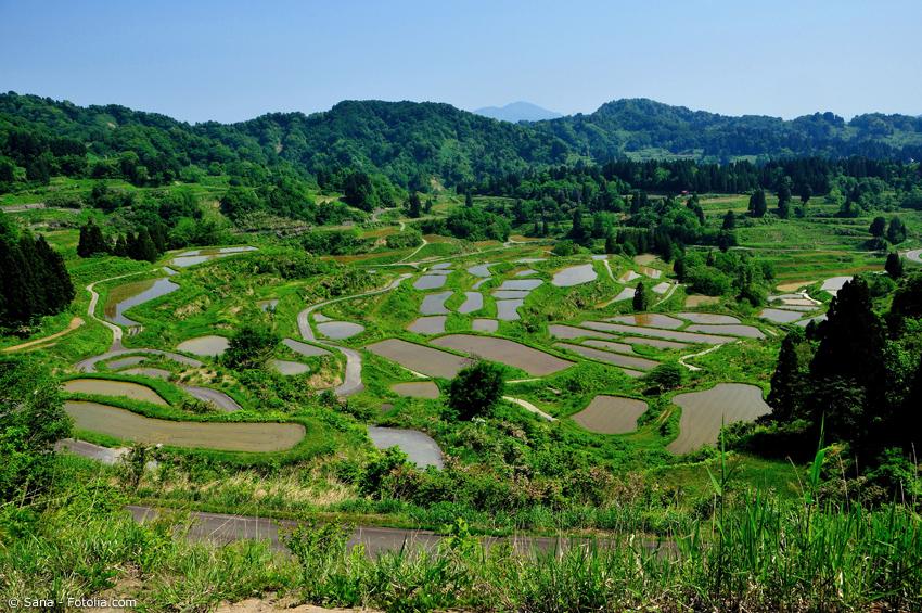 Landschaft mit Reisfeldern und grünen Bergen