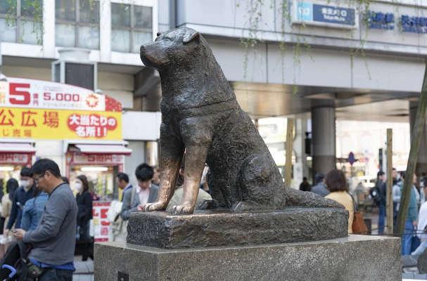 statue-von-hachiko
