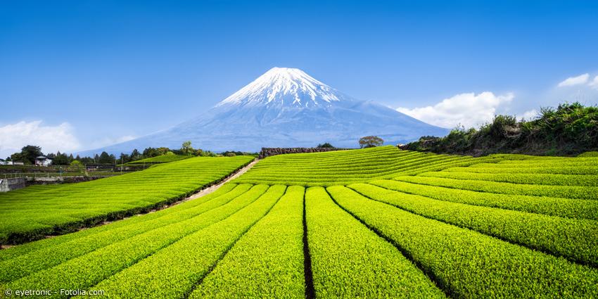 Teefelder mit Berg Fuji im Hintergrund