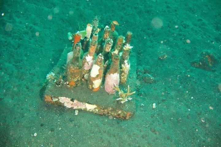 Unterwasser-Wein aus Japan: Im Meer durch Wellen gereift