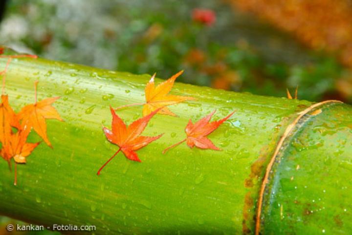 Übersteht Bambus die Herbst- und Wintermonate im Garten?