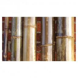 Bambusrohre 2m, natur vorlackiert