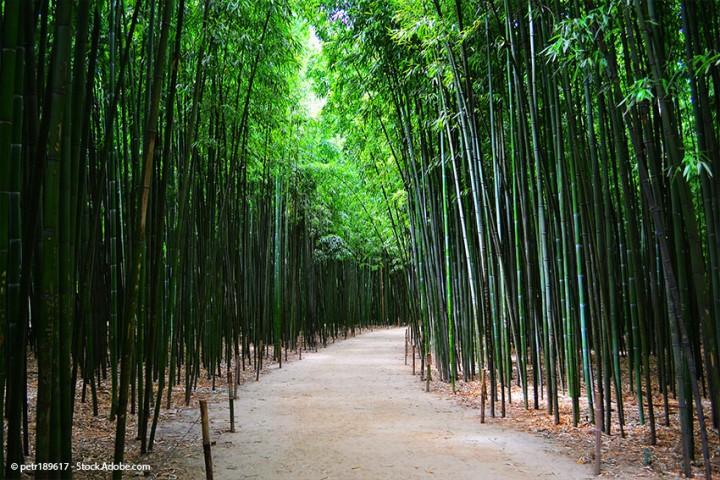 Eine Bambusstange – 100 Möglichkeiten: Mit Bambus selber bauen!