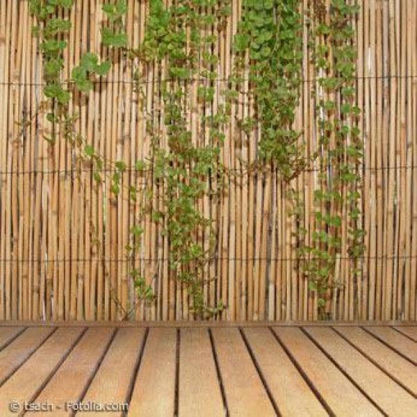 Bambus – ein vielseitiger Schmuck für Garten und Terrasse