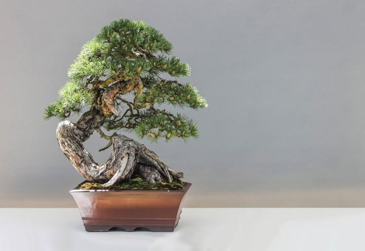 Bonsaikunst – Natur im Miniaturformat genießen