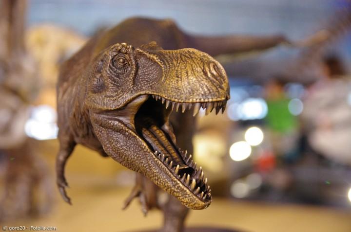Die Präfektur Fukui: Das Reich der Dinosaurier in Zentraljapan