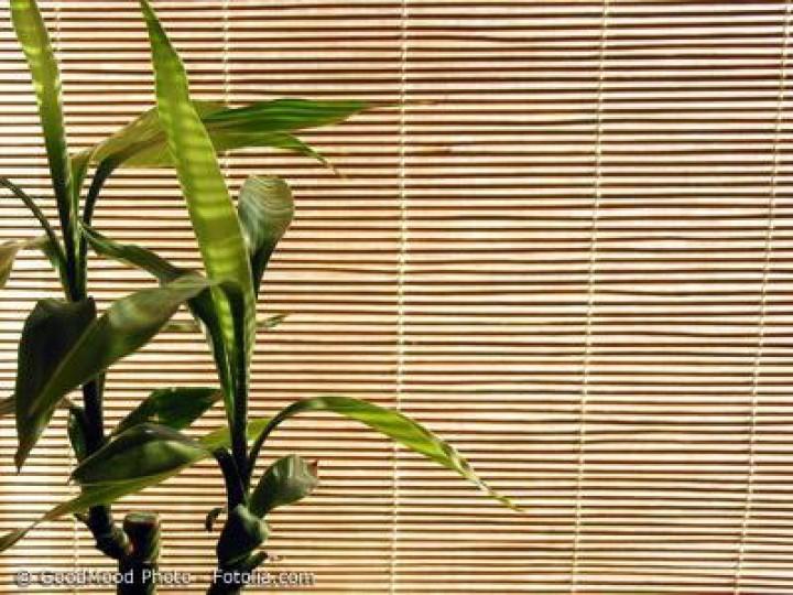 Für Fensterrollos im japanischen Stil Bambus auswählen
