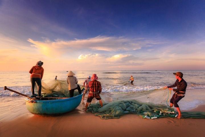 Niedrige Fangquoten der japanischen Fischerei durch zu sauberes Wasser?