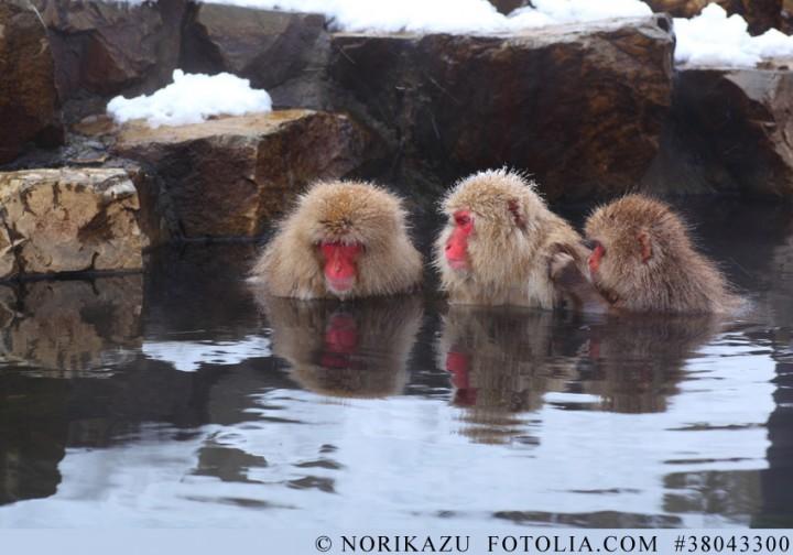 Beeindruckende Erfinder und skrupellose Diebe - die Welt der japanischen Affen