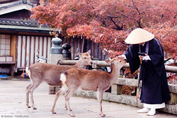 Japanische Meditation im Wandel der Zeiten