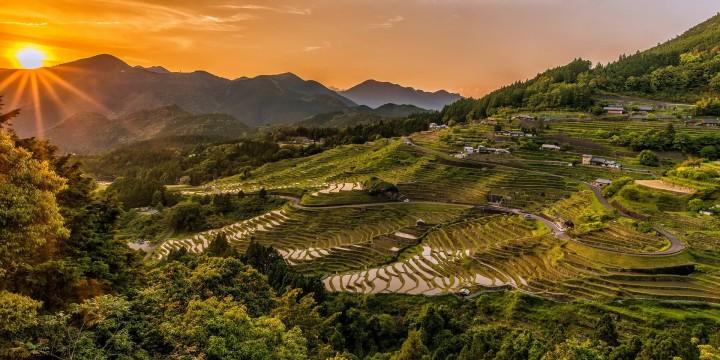 Japans Kaiser pflanzt Reissamen im Kaiserpalast