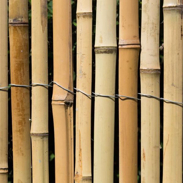 sichtschutz bambus z une bambusz une bambus garten japanwelt. Black Bedroom Furniture Sets. Home Design Ideas