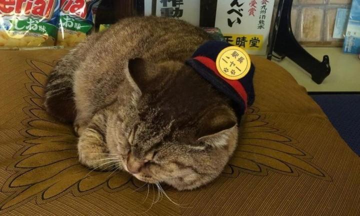 Berühmte Bahnhof-Katze ist in Japan gestorben