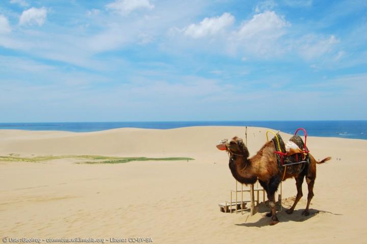 In Japan Kamel reiten und Sanddünen bestaunen? Auf nach Tottori!
