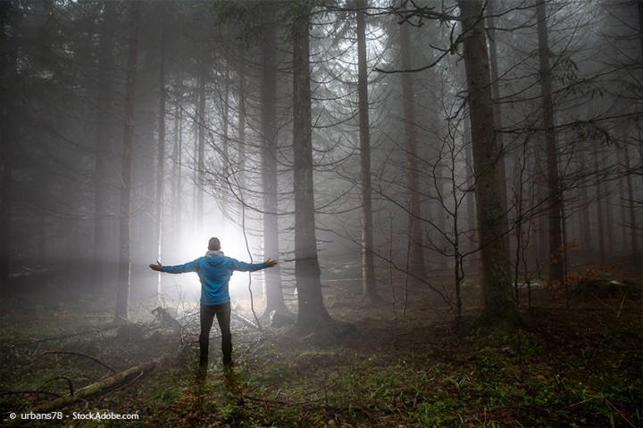 Shinrin Yoku – Waldbaden: der Gesundheitstrend aus Japan