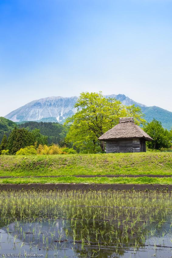 Reisfeld mit kleiner Hütte vor Bergen und blauem Himmel in Tottori