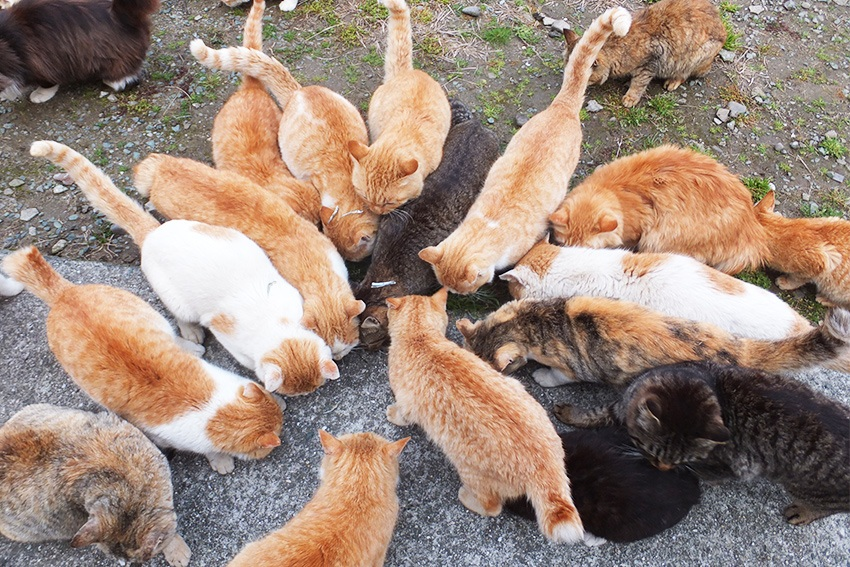 Touristenfütterung Katzeninsel Japan