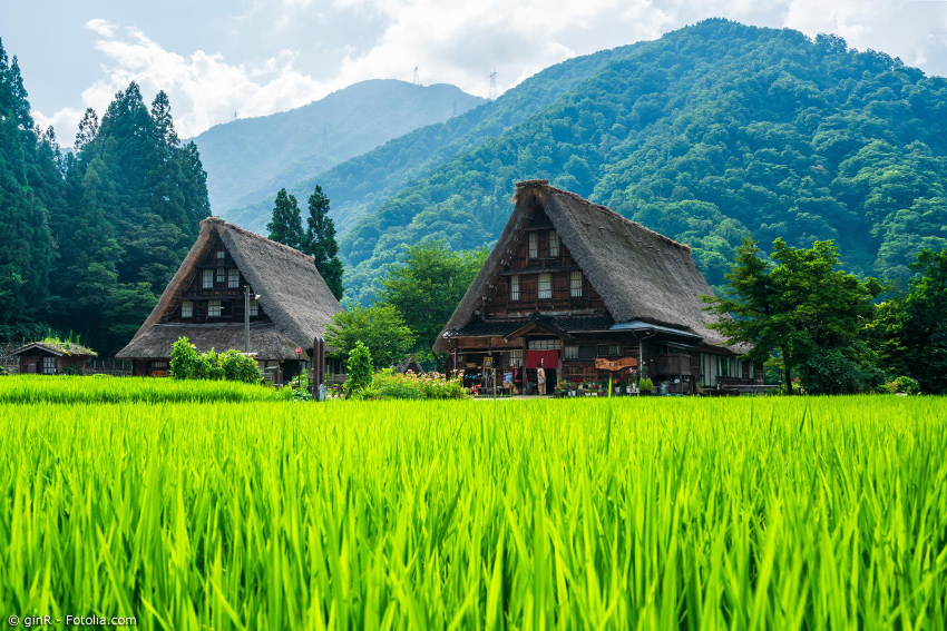Zwei Häuser des Dorfes Gokayama mit Reisfeld im Vordergrund und Bergen im Hintergrund