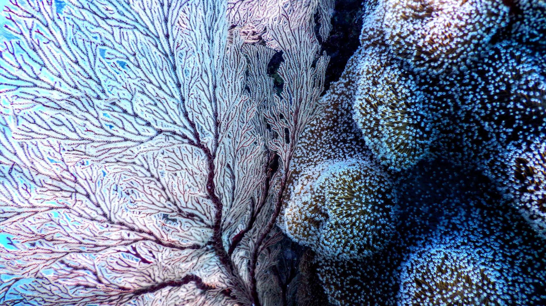 Weitere Facetten der Lebewesen in der Unterwasserwelt von Okinawa