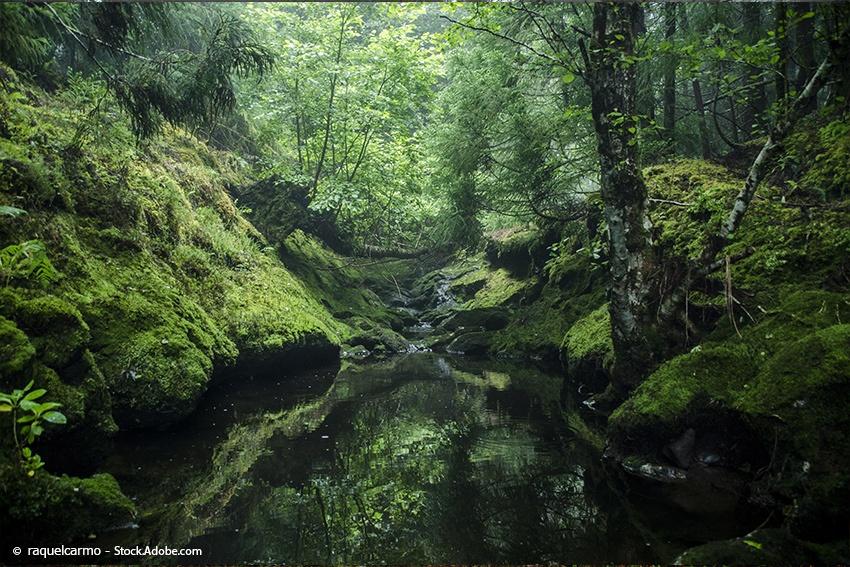 waldbaden-deutschland