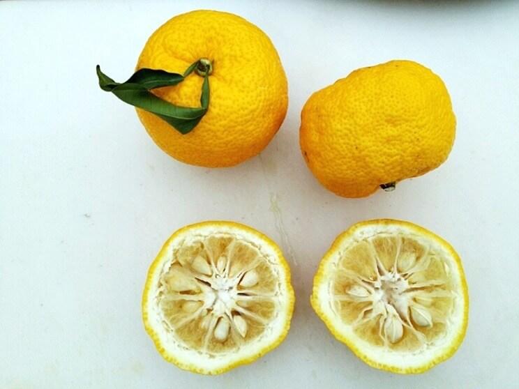 Kreuzung aus Zitrone und Mandarine