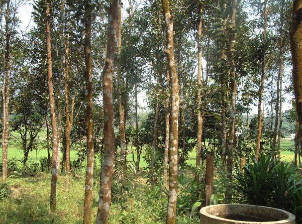 zimtplantage-vietnam